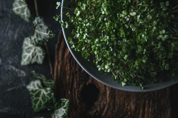 Vogelperspektive auf einen Behälter mit grünen Blättern einer Pflanze