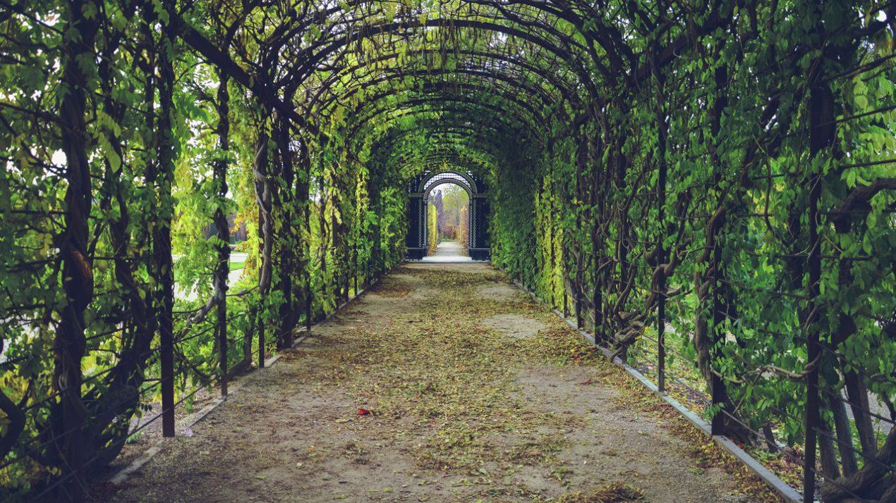 GUARDI Österreich Blog Pergola Windfang Windschutz grün Garten Oase