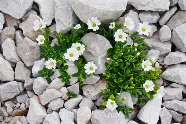 Einzelne Pflanzen wachsen aus einem Steinboden