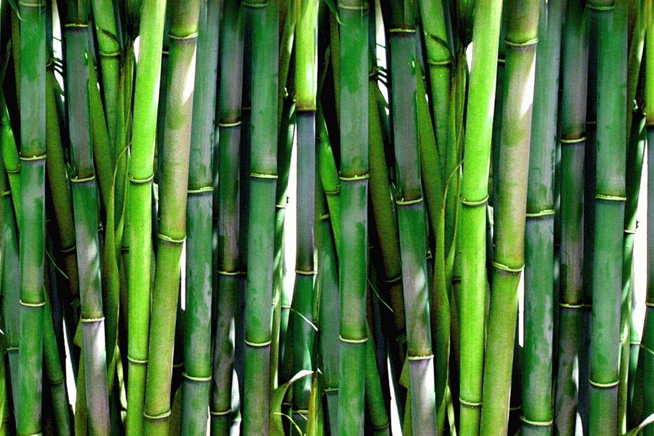 GUARDI Austria Bamboo green privacy screen garden
