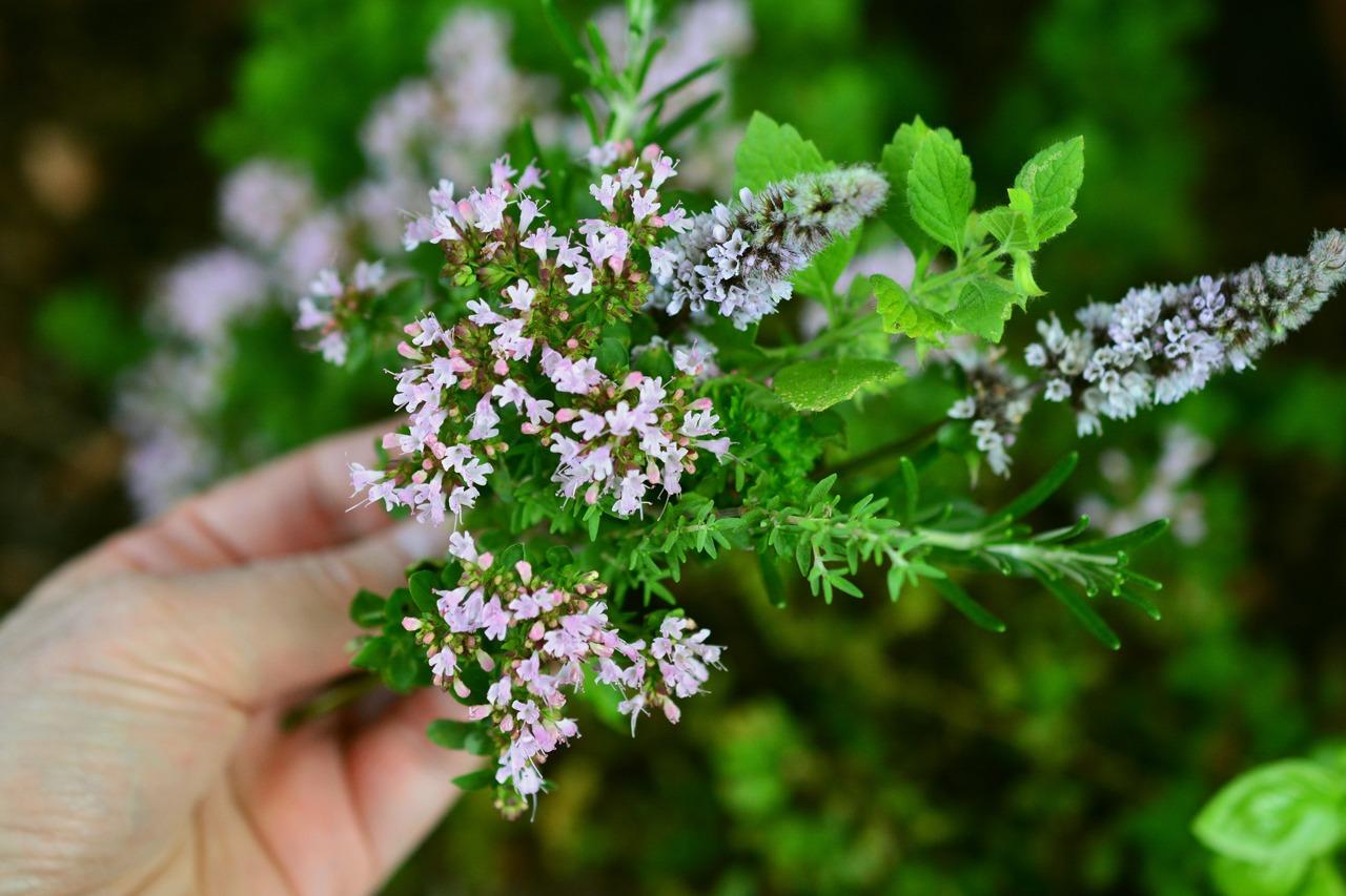 GUARDI Austria herbs Ayurveda healthy aroma fragrance at home herb garden