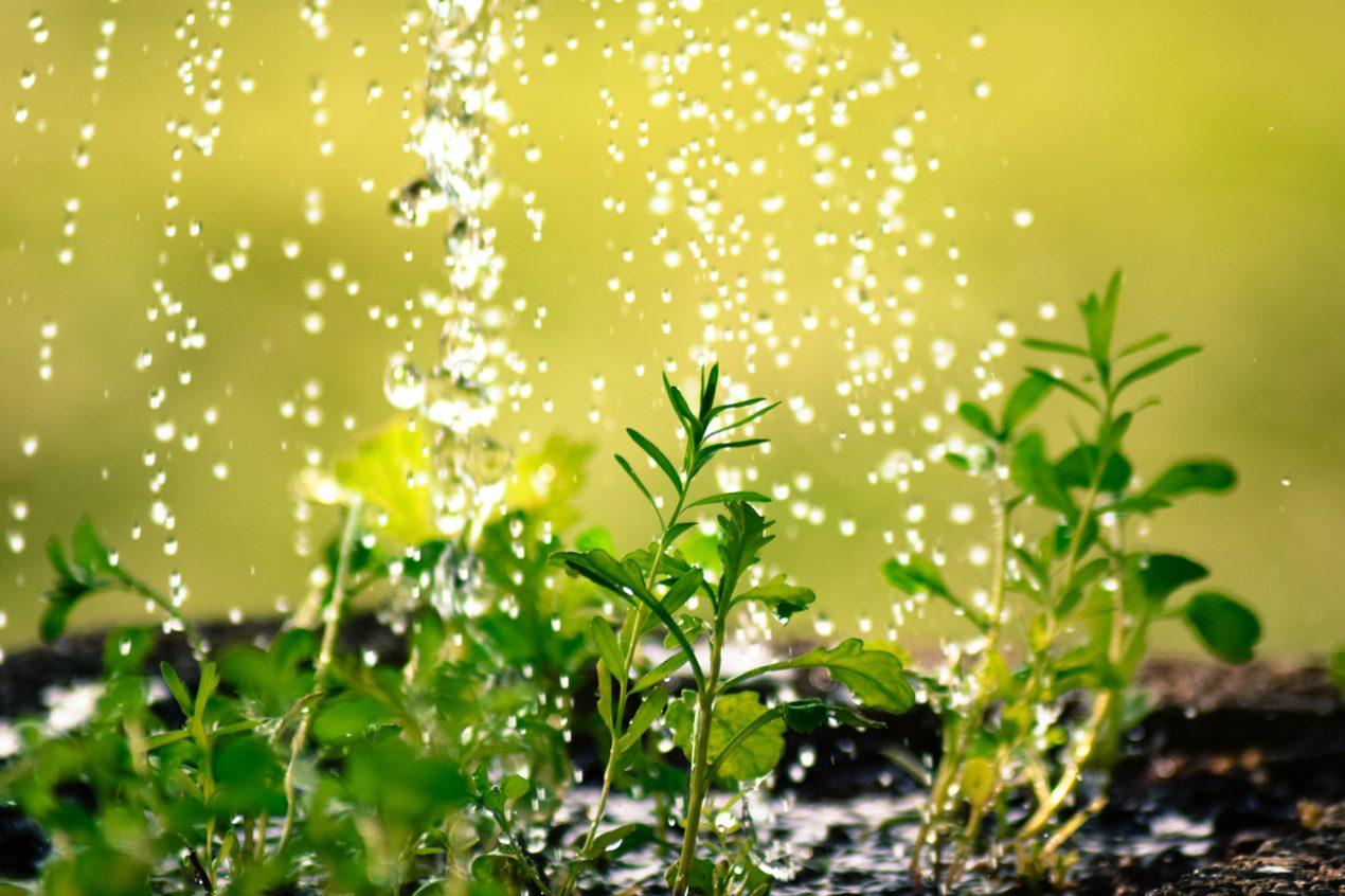 GUARDI Österreich Garten Bewässerung Sommer Tropfbewässerung Wasser sparen Hochbeet Balkon Terrasse