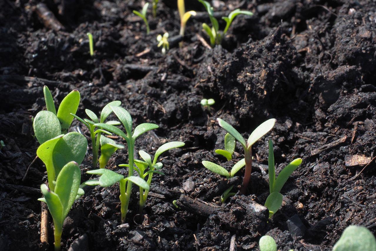 GUARDI Österreich Garten Pflanzen Setzlinge Wasser Erde Bewässerung Pflege