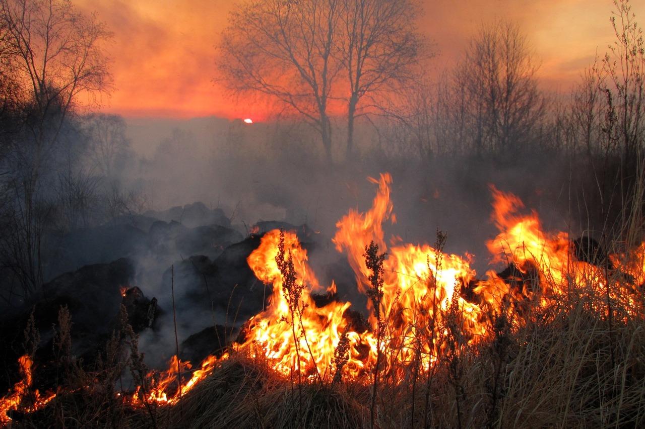 GUARDI Österreich Feuer Brand Funkenschlag Feld trocken