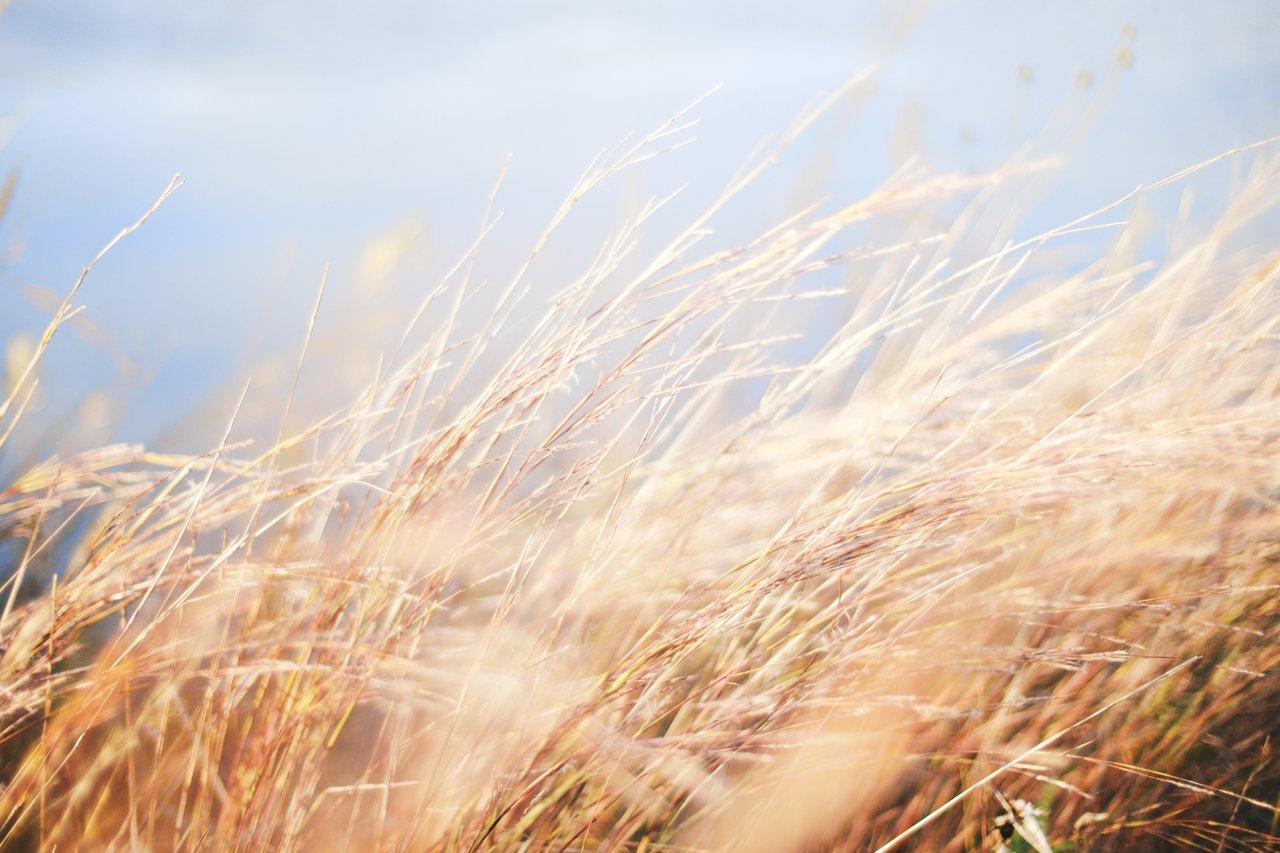 GUARDI Austria Ziergras Gartenmonat Februar zurückschneiden