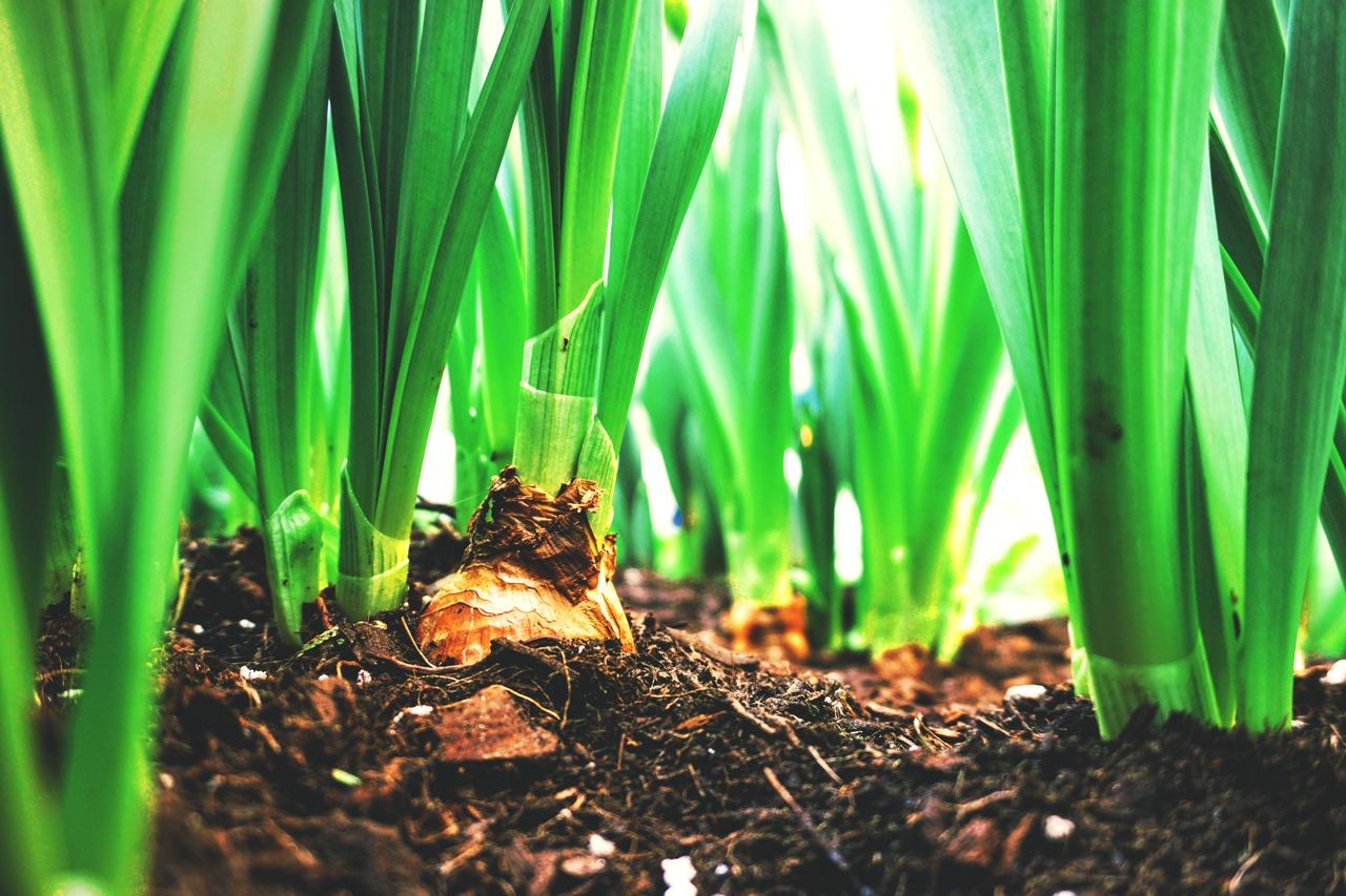 GUARDI Garten Pflanzen anlegen auswählen Neubau