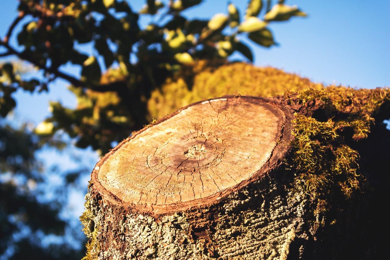GUARDI Sägen Astsäge Ast Holz Baum Pflege