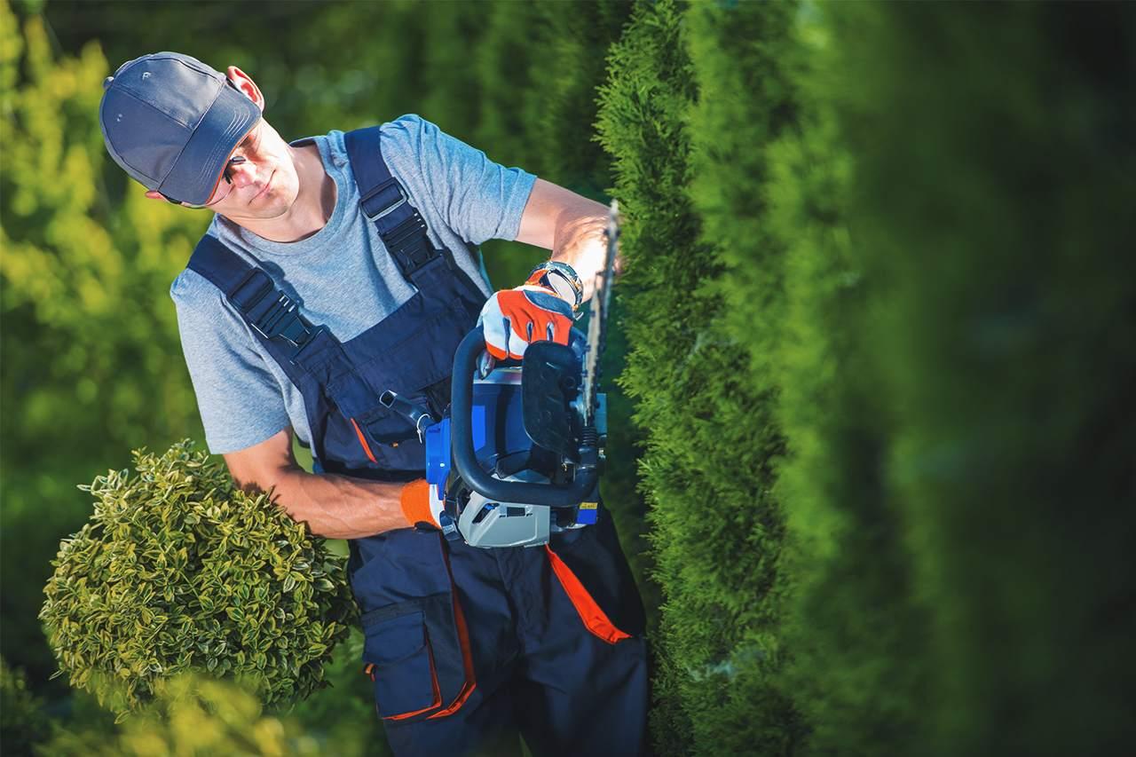 GUARDI Sichtschutz Hecke Garten zuhause Eigenheim Bauherren