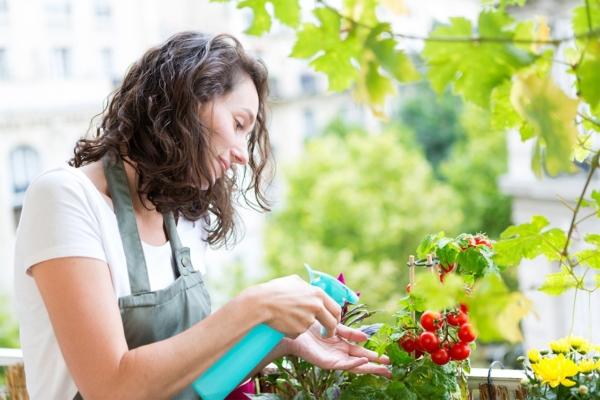 Frau steht am Balkon und besprüht eine Tomatenpflanze mit Wasser