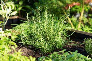 GUARDI Hochbeete bepflanzen Salat Kräuter Gartenerde