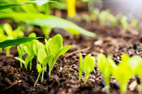 GUARDI Österreich Hochbeet Blumen Gemüse Kräuter pflanzen anlegen Alu Aluminium Tipps Tricks