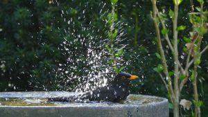 Guardi Österreich Vogeltränke Gartenidee Zäune Sichtschutz