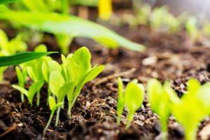 Guardi Österreich, Anbauplan, Pflanzen anbauen, Erde