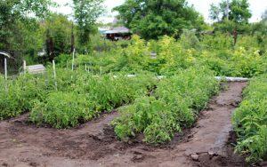 Gemüsegarten anlegen für Anfänger