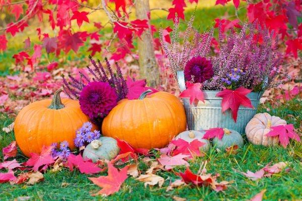 Man erkennt eine bunte Herbst Dekoration im Garten - Kürbisse, Blumen und Herbstlaub.