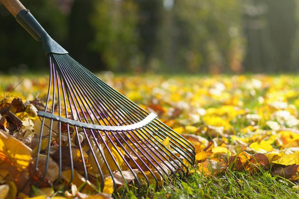 Rechen, der im Herbst die gefallenen Blätter zusammenkehrt