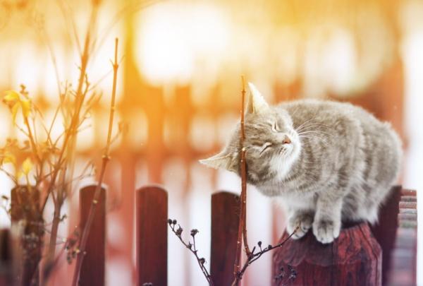 Katze sitzt auf einem Holzpfosten eines Zauns und reibt sich am Ast eines Strauchs