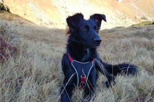 Zaun Garten Fur Hunde Absichern Schutzmoglichkeiten Im Uberblick