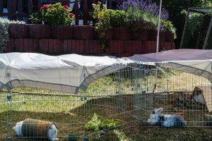 Garten Fur Kaninchen Absichern