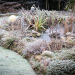 Teich mit Raureif im Winter
