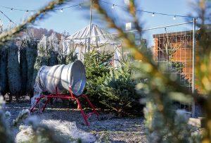 Guardi_Österreich_Weihnachtsbaum_Kaufen