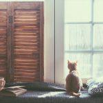 Eine Katze sitzt auf einer Fensterbank und schaut aus dem Fenster