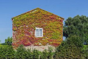 Guardi, Österreich, Vertical Gardening, vertical garden