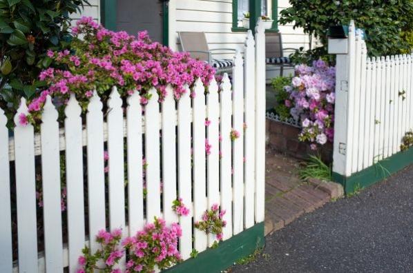 Man erkennt einen weißen Zaun mit rosa Blüten