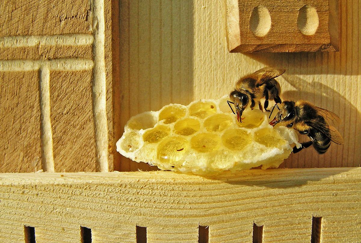 Balkon, Balkongeländer, Holz, Bienen