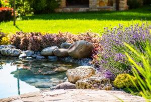 Garten, Meditation, Lavendel, Pflanzen