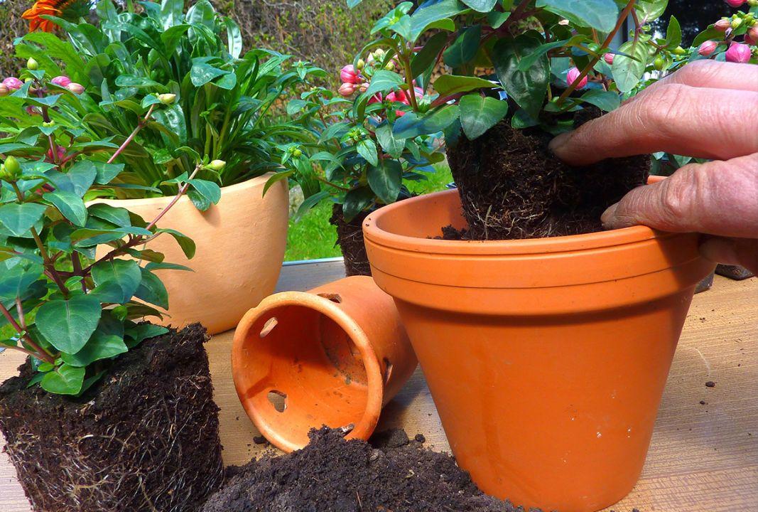 Gartenarbeit, Blumenkübel, Pflanzkübel, Pflanztopf, Blumenerde, Blumen, Frühling, Sommer, Sonne