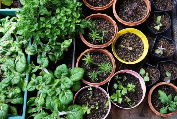 Kräutergarten mit kleinen Töpfen von oben fotografiert