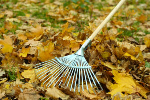 Guardi, Österreich, Herbst, rechen, winterfit