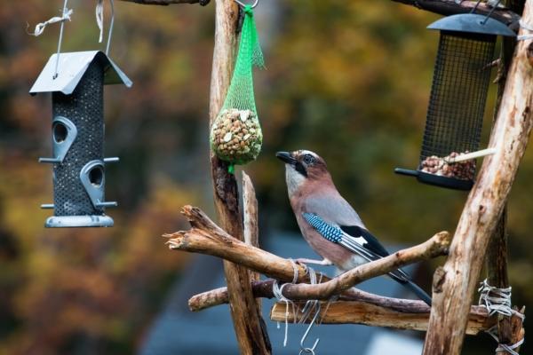 Futterstelle, Winter, Vogel, GUARDI, design, Österreich, wie finden vögel futterstelle, Balkon, Garten, diy, selbermachen, Meisenknödel