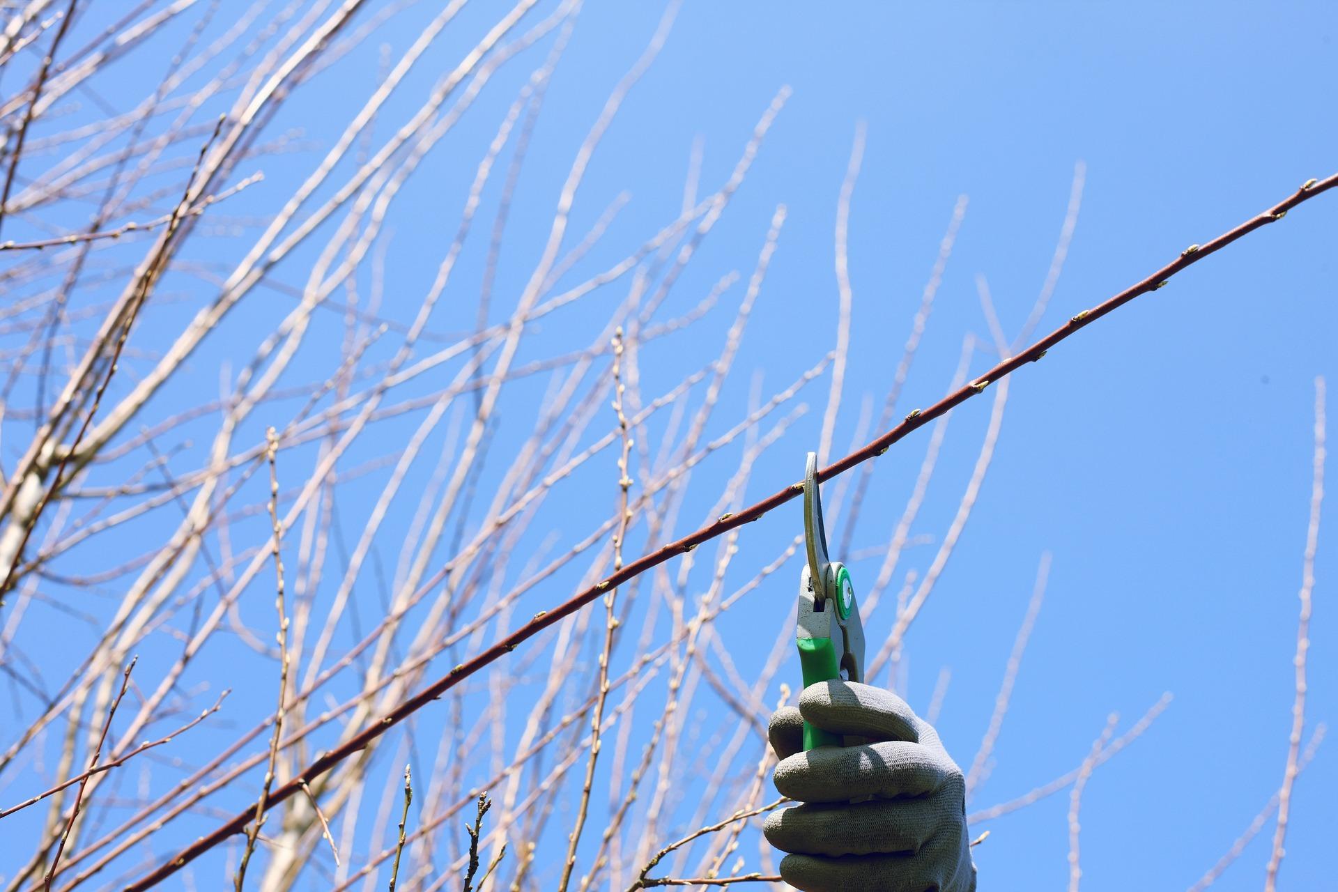 Gartenscheere schneidet Ast ab, blauer Himmel im Hintergrund
