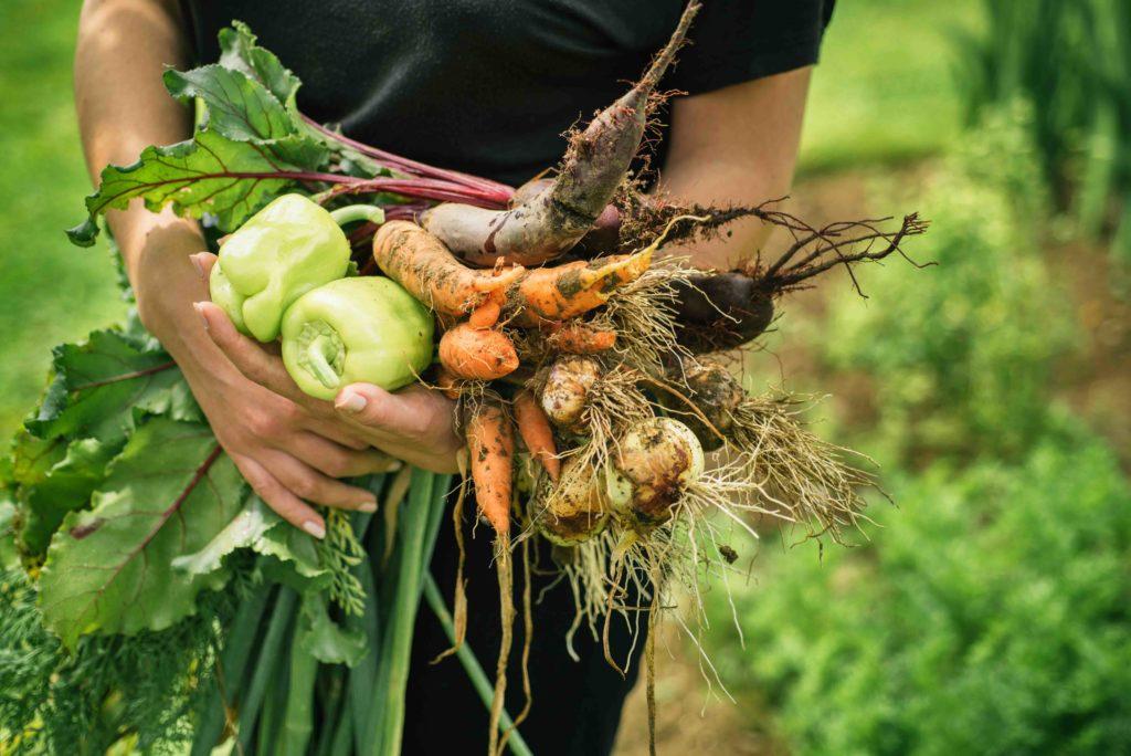 Frisches Gemüse aus dem eigenen Garten