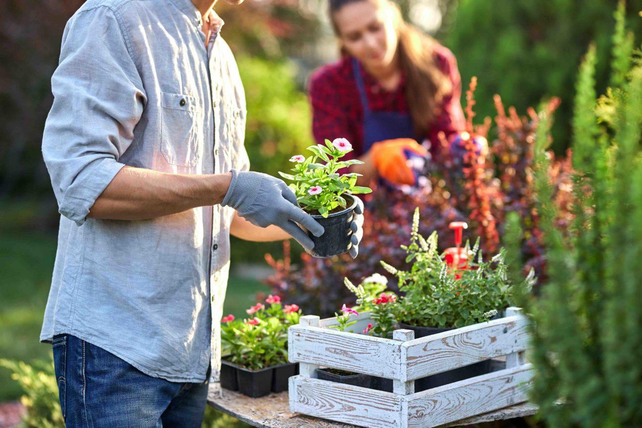 Frau und Mann bei Gartenarbeit mit verschiedensten Pflanzen