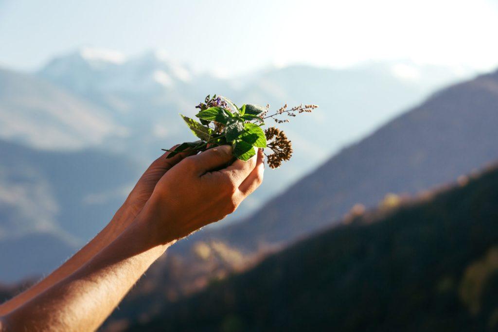 Verschiedenste Kräuter in den Händen, im Hintergrund Berge