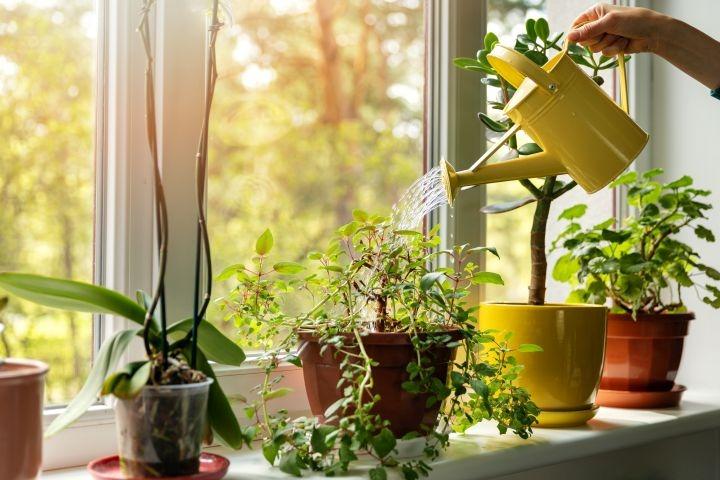 man erkennt eine Hand, die eine Gießkanne in der Hand hält und pflanzen gießt