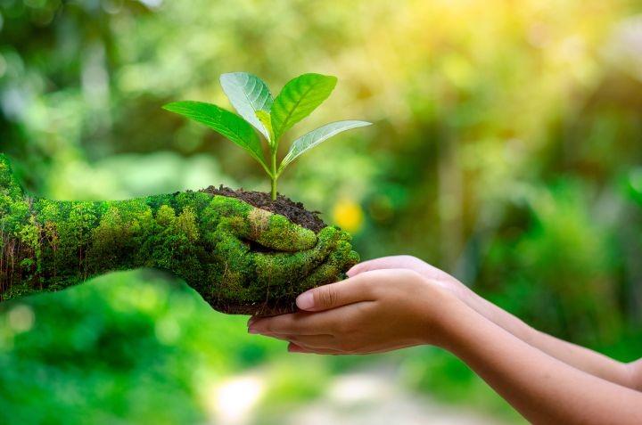 Auf dem Bild is zu sehen wie eine aus grasbestehende Hand einer menschlichen Hand eine Pflanze übergibt