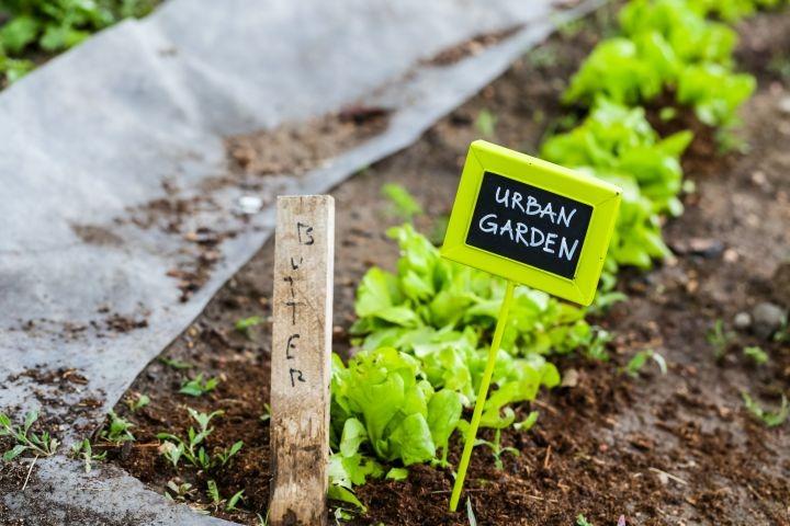 """Auf dem Bild sind Pflanzen mit einem Schild zu erkennen. Auf jenem Schild steht """"Urban Garden"""""""