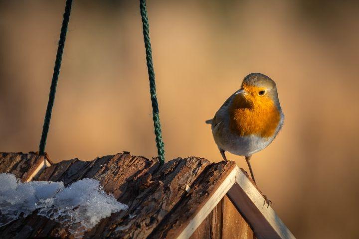 Man erkennt einen Vogel auf einem Futterhaus