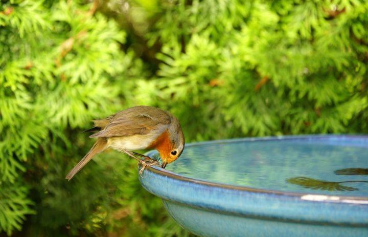 Man erkennt einen Vogel der auf einer Wassertränke sitzt und trinkt
