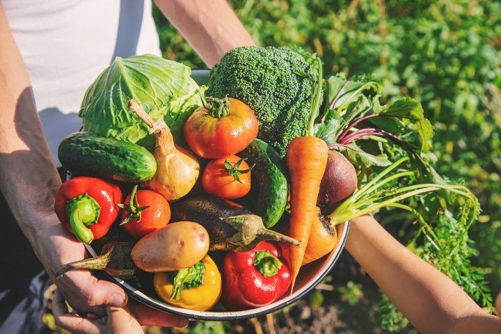 Man erkennt eine Schale voller Gemüse