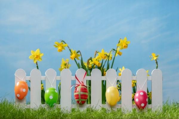 Auf einem weißen Zaun hängen Ostereier und im Hintergund erkennt man gelbe Narzissen