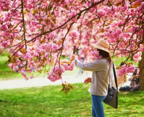 Eine Frau steht unter einem Kirschbaum der blüht und fotografiert sich
