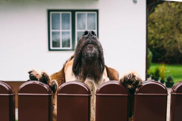 Ein Hund zieht sich an einem Gartenzaun hoch und blickt mit dem Kopf darüber