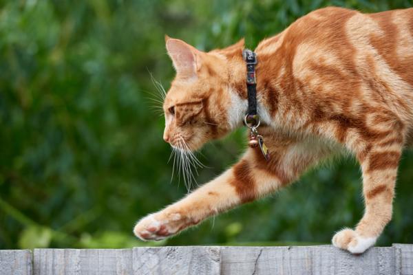 Katze balanciert auf einem Gartenzaun aus Holz
