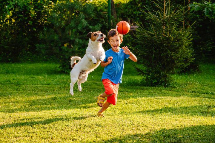 Ein kleiner Junge spielt mit einem Hund