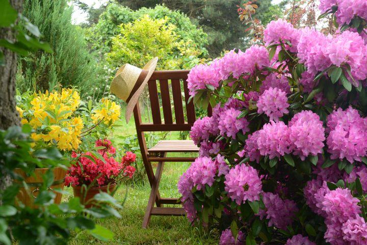 Man erkennt Rosen und einen Holzstuhl